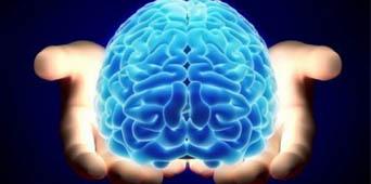 Memória e Cérebro vivo